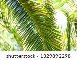 palm trees in the park.... | Shutterstock . vector #1329892298