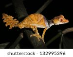 satanic leaf tailed gecko ... | Shutterstock . vector #132995396
