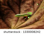 Green Tree Lizards Are A Type...