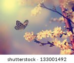 Stock photo vintage butterfly and cherry tree flower in spring 133001492