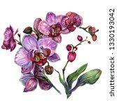 watercolor botanical... | Shutterstock . vector #1330193042