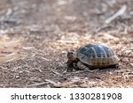 Stock photo the land tortoise walking tortoises and turtles are both reptiles the defining difference is that 1330281908