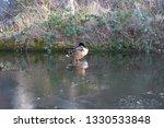 Ducks Standing...
