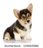 Stock photo pembroke welsh corgi puppy sitting looking at camera isolated on white background 133065086