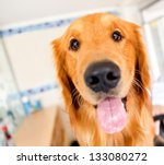 Stock photo cute dog at the vet with his tongue out 133080272