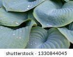 beautiful background with... | Shutterstock . vector #1330844045