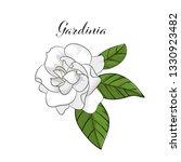 Hand Drawn Gardenia Flower...