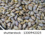 Small photo of Clams,Surf clam, Short necked clam, Carpet clam, Venus shell, Baby clam,Thai clams for background