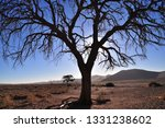 solitary tree namibia | Shutterstock . vector #1331238602