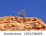 solitary tree namibia | Shutterstock . vector #1331238605
