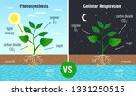 photosynthesis accumulating... | Shutterstock .eps vector #1331250515