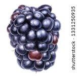 watercolor drawing blackberry ... | Shutterstock . vector #1331250935