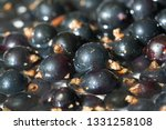 black currant  blackcurrant ... | Shutterstock . vector #1331258108
