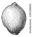 Coconut Or Cocos Nucifera ...