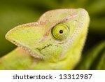 chameleon   Shutterstock . vector #13312987