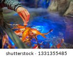 Male Hand Feeding Fish In...