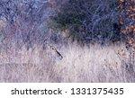 Subtle Profile Of Waterbuck Ew...