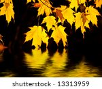 Backlit maples leaves glowing like gold flames above gently rippled water - stock photo