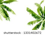 tropical foliage background.... | Shutterstock . vector #1331402672