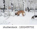dog  shepherd  german  animal ... | Shutterstock . vector #1331459732
