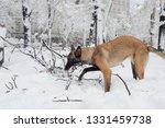 dog  shepherd  german  animal ... | Shutterstock . vector #1331459738