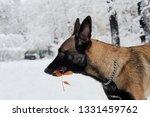 dog  shepherd  german  animal ... | Shutterstock . vector #1331459762