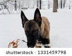 dog  shepherd  german  animal ... | Shutterstock . vector #1331459798