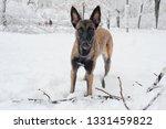 dog  shepherd  german  animal ... | Shutterstock . vector #1331459822