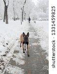 dog  shepherd  german  animal ... | Shutterstock . vector #1331459825