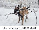 dog  shepherd  german  animal ... | Shutterstock . vector #1331459828