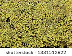 top view green water lily plant ... | Shutterstock . vector #1331512622