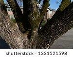 Bark Of A Dogwood Tree On A...