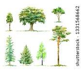 oak birch pine spruce.deciduous ... | Shutterstock . vector #1331568662