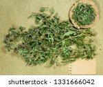 mint  spearmint. dry herbs for... | Shutterstock . vector #1331666042