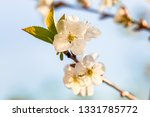 beauty of spring  closeup of... | Shutterstock . vector #1331785772
