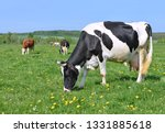 cows  on a summer pasture | Shutterstock . vector #1331885618