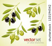 vector set of olive branches | Shutterstock .eps vector #133194542