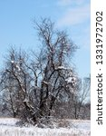 tree during the winter season   Shutterstock . vector #1331972702
