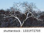 tree during the winter season   Shutterstock . vector #1331972705