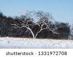 tree during the winter season   Shutterstock . vector #1331972708