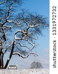 tree during the winter season   Shutterstock . vector #1331972732