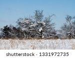 tree during the winter season   Shutterstock . vector #1331972735