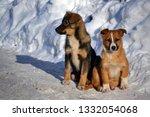 2 little puppies walk in the... | Shutterstock . vector #1332054068