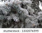 fir branches in hoarfrost. snow ... | Shutterstock . vector #1332076595