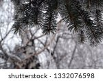 fir branches in hoarfrost. snow ... | Shutterstock . vector #1332076598