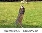 Stock photo funny cat 133209752