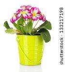 beautiful pink primula in  pail ...   Shutterstock . vector #133217198