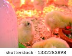 little chickens in the box. ... | Shutterstock . vector #1332283898