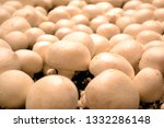 white champignons on production.... | Shutterstock . vector #1332286148