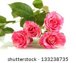 beautiful pink roses close up... | Shutterstock . vector #133238735